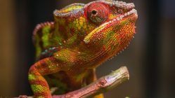 selective focus photography of red and green reptile